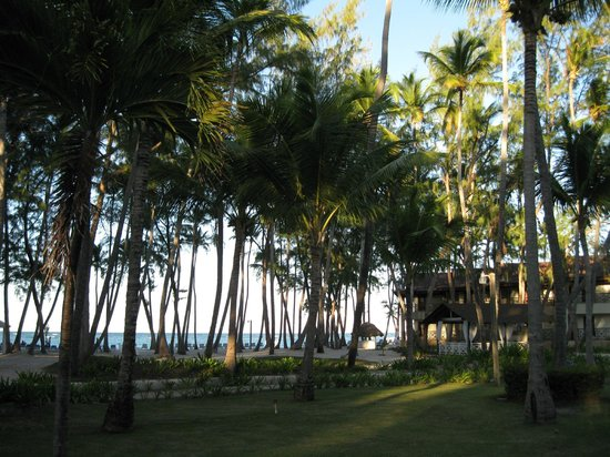 Vista Sol Punta Cana: palmier
