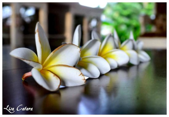 Zen Resort Bali: Offerings