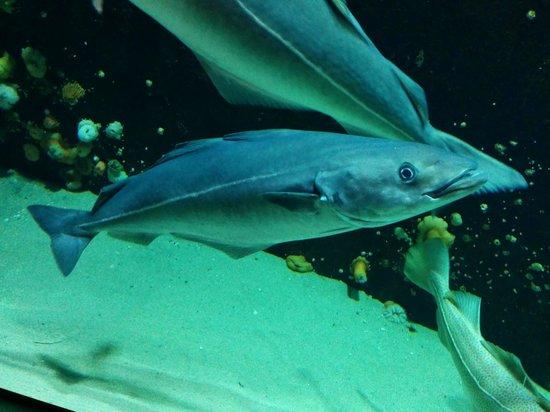 Nordsoen Oceanarium: 2