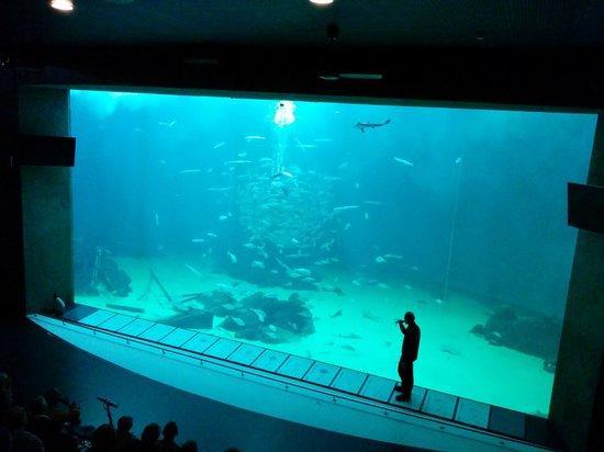 Nordsoen Oceanarium: duze akwarium