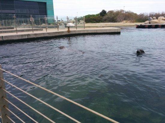 Nordsoen Oceanarium: basen z fokami na zewnatrz