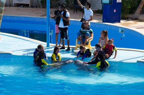 Dolphina Park : Viktoria