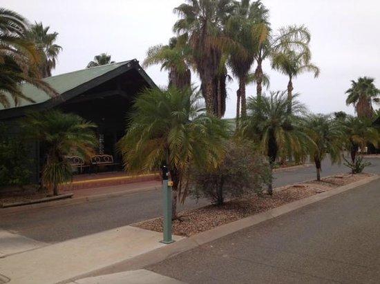 Desert Palms Alice Springs : grounds