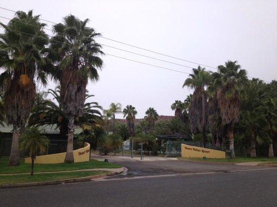Desert Palms Alice Springs: palms