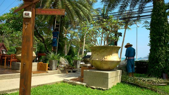 Seaview Patong Hotel: Onderhoud aan de beplanting