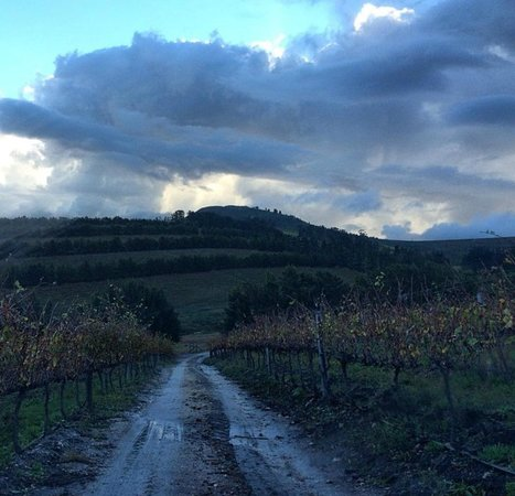 Hermanuspietersfontein Cottages: Take walks in the vineyards