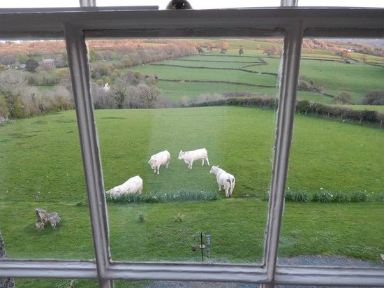 Beera Farmhouse: The lovely view from the room