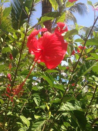 Pueblo Bonito Emerald Bay: Flower in grounds