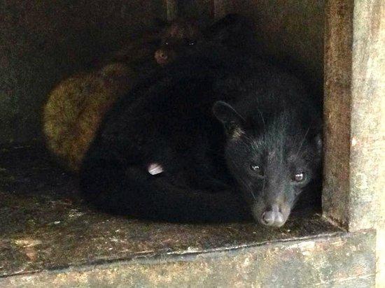 Oka Agro Wisata: Luwak in a small cage