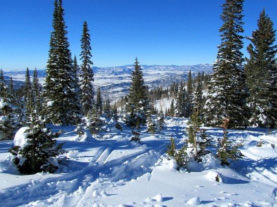 Steamboat Ski Resort: In the Trees
