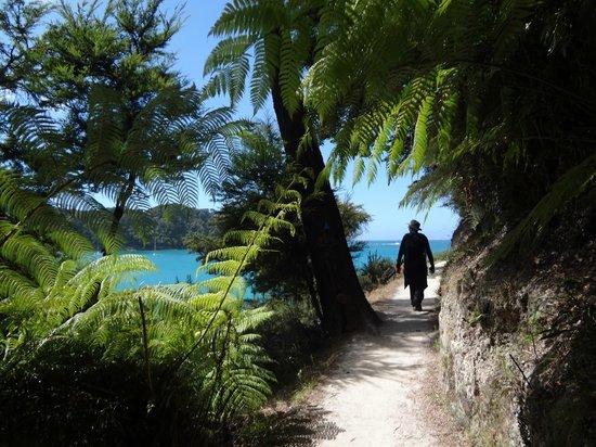 Wilsons Abel Tasman: fern forests
