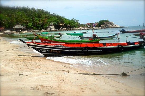 Sensi Paradise : views from the pier