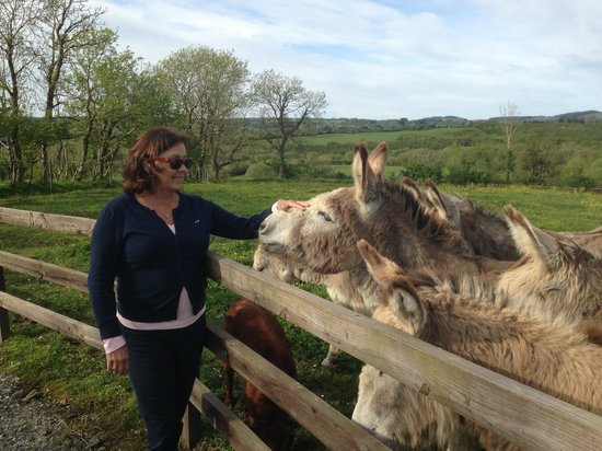Clondanagh Cottage: My wife with donkeys just prior to climbing in and feeding them.