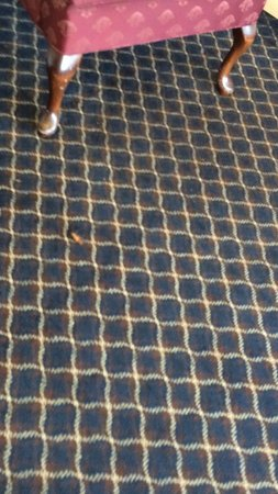 Travelodge Williamsburg Central: Had to sneak this pic of a dead cockroach on the lobby floor! Manager was furious that I tried t