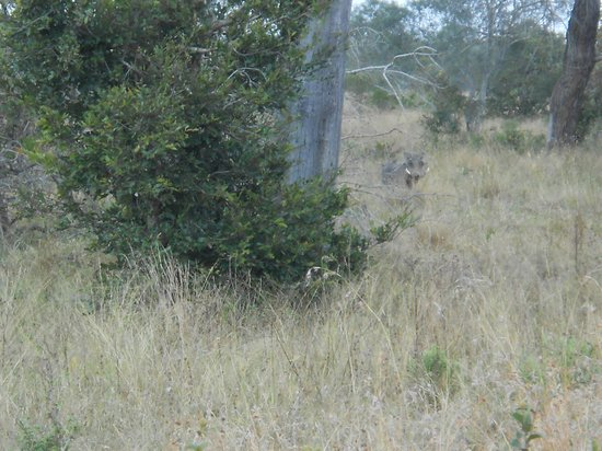 Dulini Lodge : Wart Hog Spooked During Bush Walk