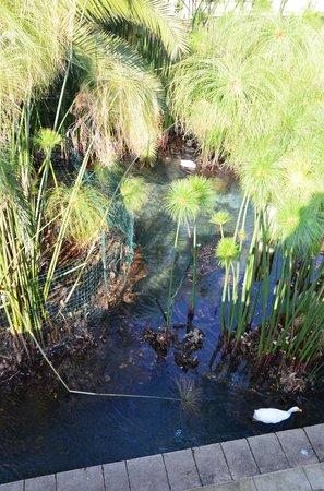Waterfowl in Fonte Aretusa