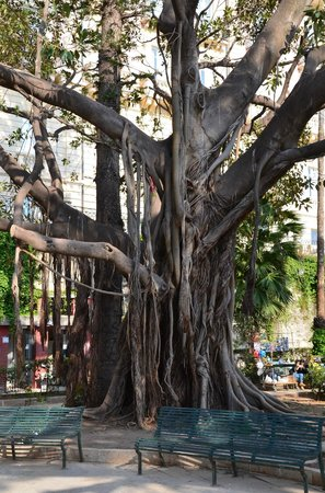 Tree in garden by Fonte Aretusa