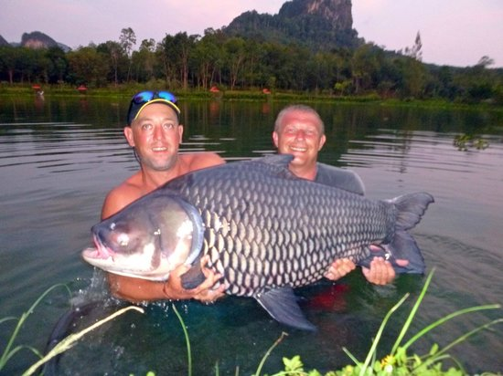 Gillhams Fishing Resorts: 115 lbs siamese carp!