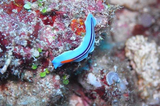 Coral Diving Club: Sea slug