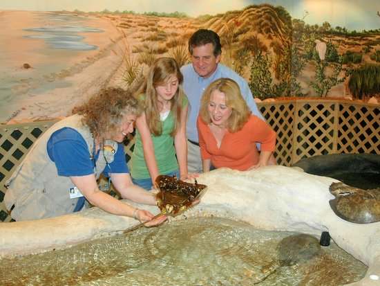 Roper Mountain Science Center : Marine Lab - close up with live specimens