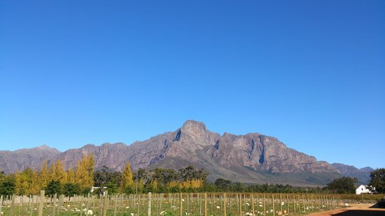 Fyndraai restaurant at Solms-Delta: View from the entrance