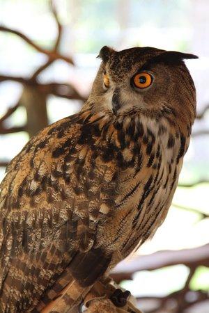 Zoological Wildlife Foundation: unforgetable