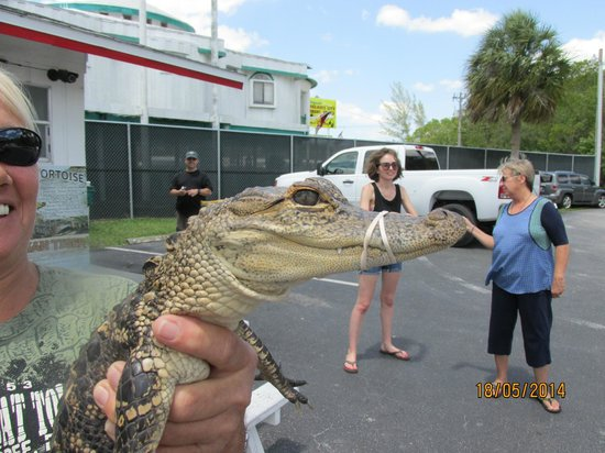Captain Jack's Airboat Tours: Welcoming Committee!