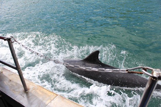 Dingle Dolphin Boat Tours : Fungie