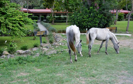 Hacienda Guachipelin: The horses from the corral went for  a stroll.