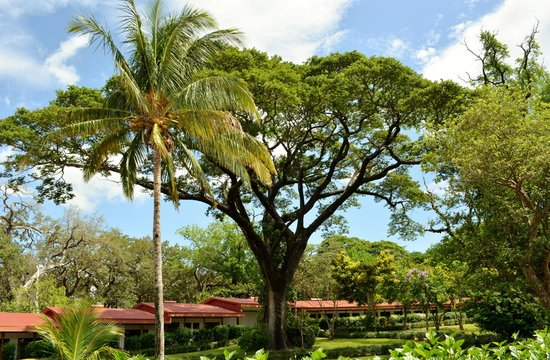 Hacienda Guachipelin : HUGE tree in the middle of the grounds