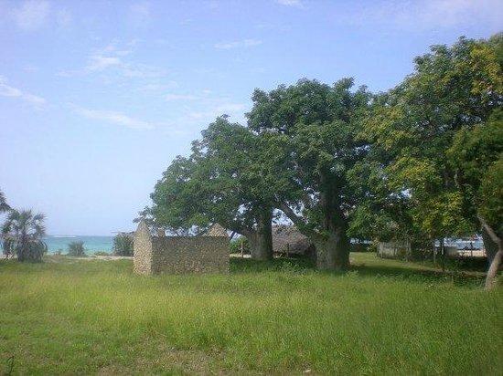 Kenyaways Beach Bed & Breakfast: Nearby Tiwi
