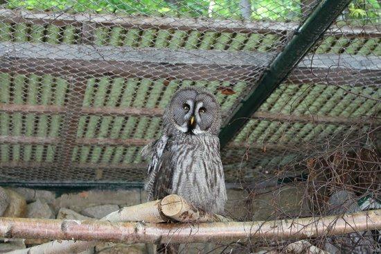 Wildpark Christianental: viele Eulen