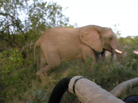 Tangala Safari Camp : Elephant up close
