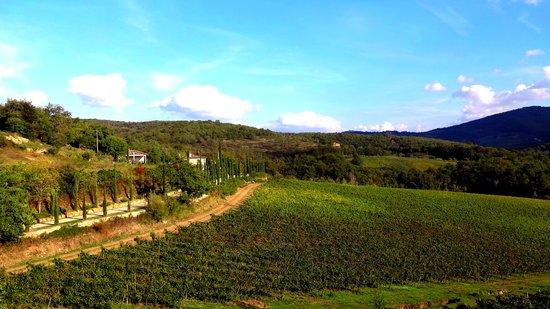 Agriturismo Podere Tegline : Vineyard in Chianti