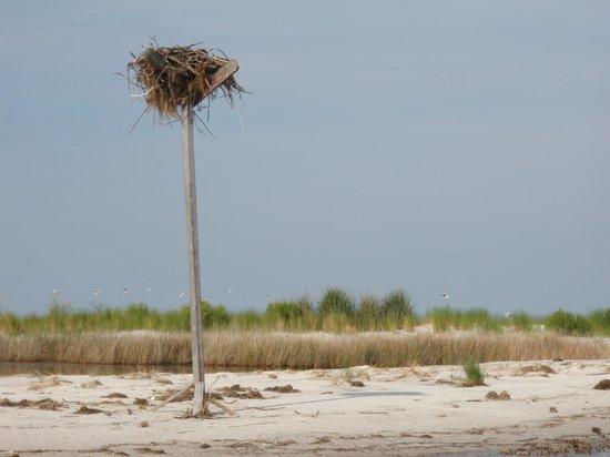 Port Haywood, VA: Bethel Beach Nature Preserve