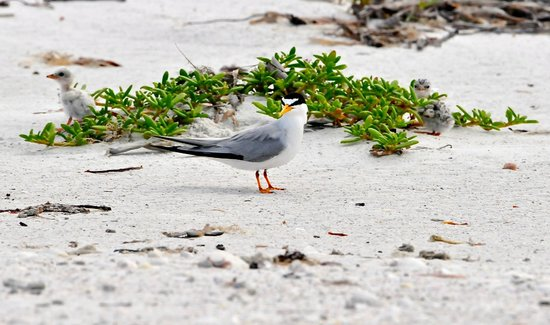 GullWing Beach Resort : Tern Family