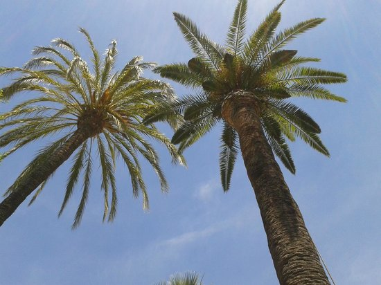 Banys Arabs (Arab Baths) : A couple of palm trees in the garden