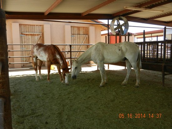 White Stallion Ranch: Horses well taken care of with shade and hay