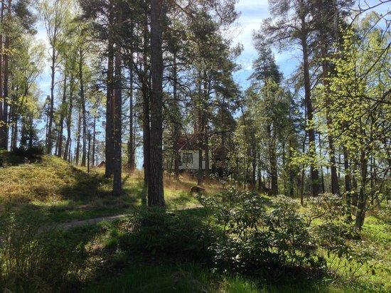 Ainola (Jean Sibelius House) : The house through the wooded garden