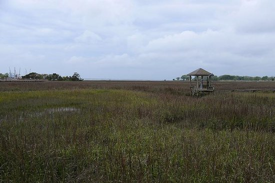 Shem Creek Inn: Boardwalk trail in the marsh behind the motel
