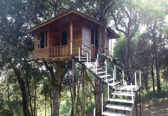 Nature Zone Resort: Tree House