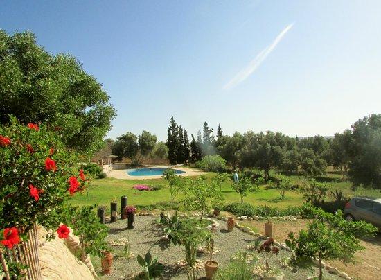 Riad Douar Des Oliviers : le jardin et la piscine