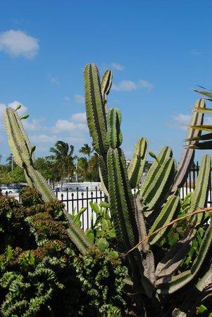 West Martello Tower: Cactus
