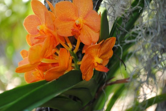 West Martello Tower: Orchids