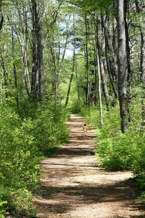 Tully Lake Campground: Camp trails