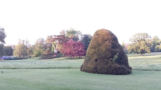 Hartwell House: lovely trees