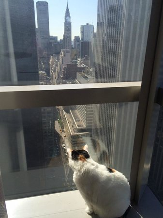 Millennium Broadway New York Times Square: Pet Friendly Hotel Has Amazing Views
