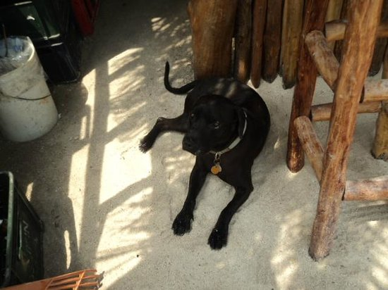 Pirate's Treasure Restaurant and Chilled Bar: Pirate the sweet puppy