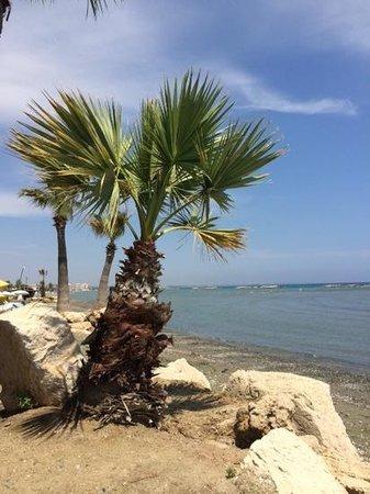 Palm Beach Hotel & Bungalows : palm beach
