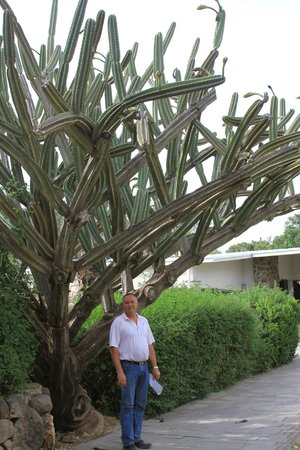 Vered Hagalil Guest Farm: The AMAZING cactus in front!